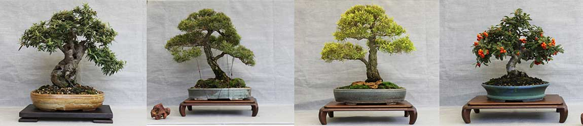 Sydney City Bonsai Club