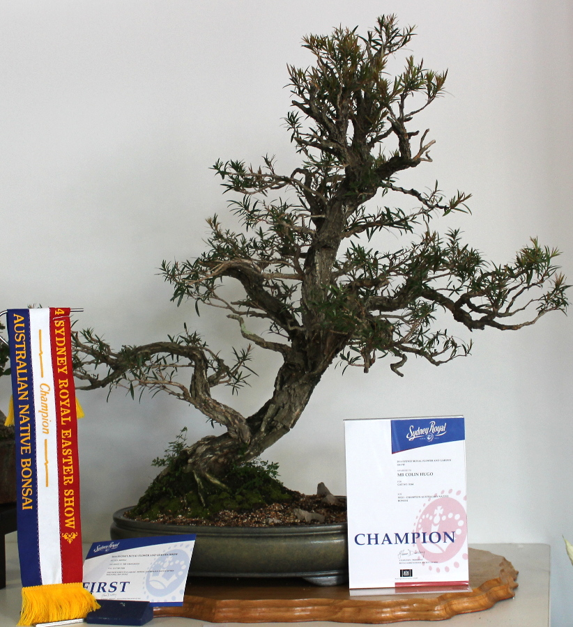 Colin Hugo from the Bonsai Society of Australia wins the Australian Native Bonsai (other than a Ficus)