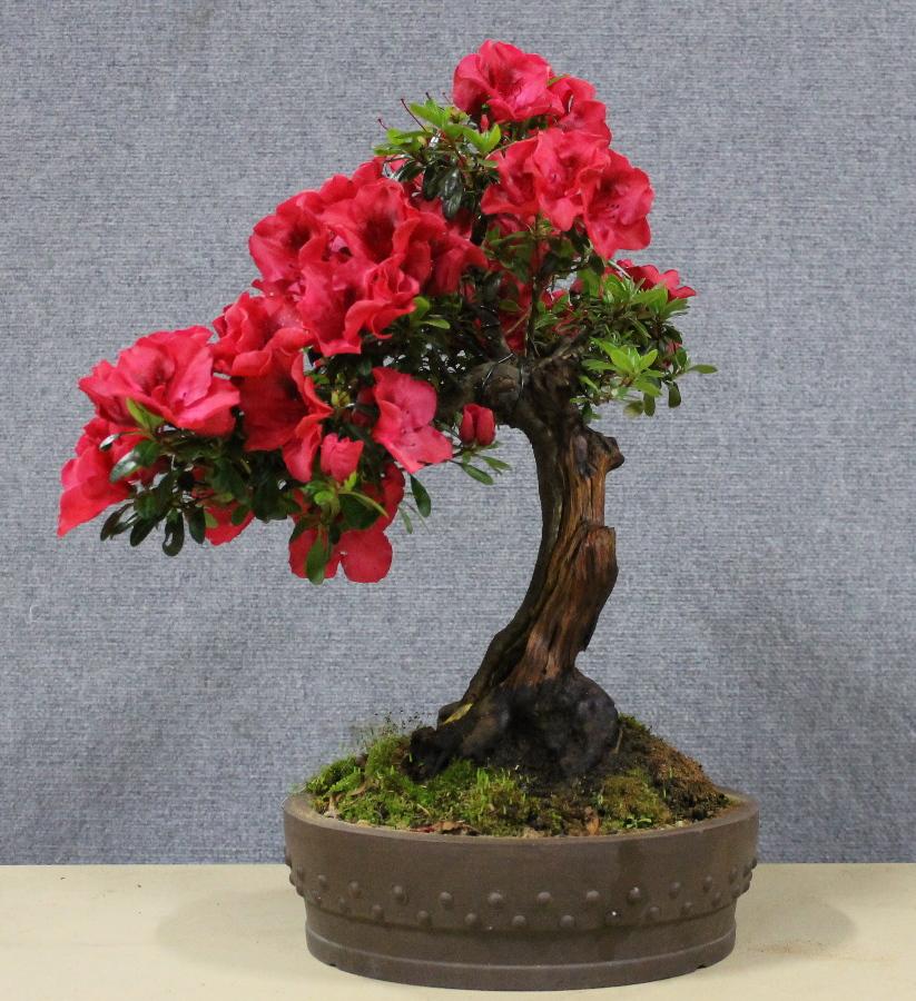 azalea - carving
