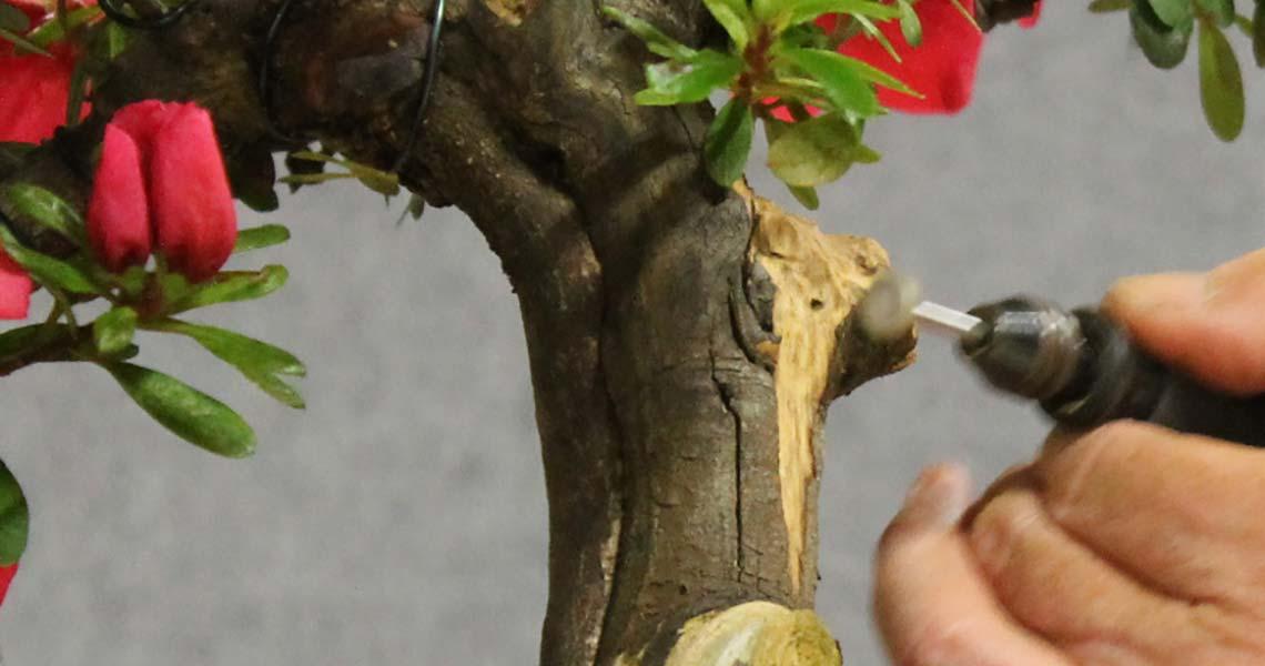 Azalea carving starts